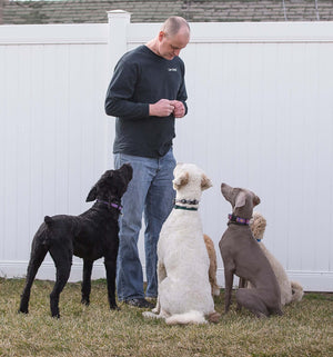 4 Reasons to Go For Dog Training