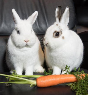Should You Buy a Rabbit?