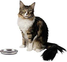Goofy Tails Stainless Steel Anti Skid Feeding Bowl for Cats - pet-club-india