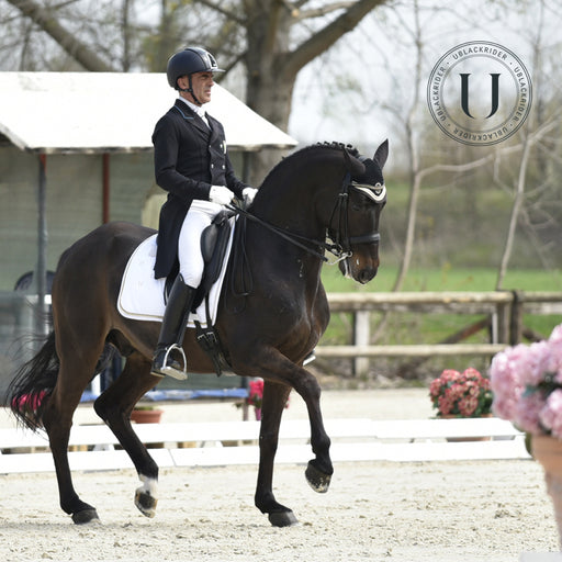 Black Competition | Sottosella dressage