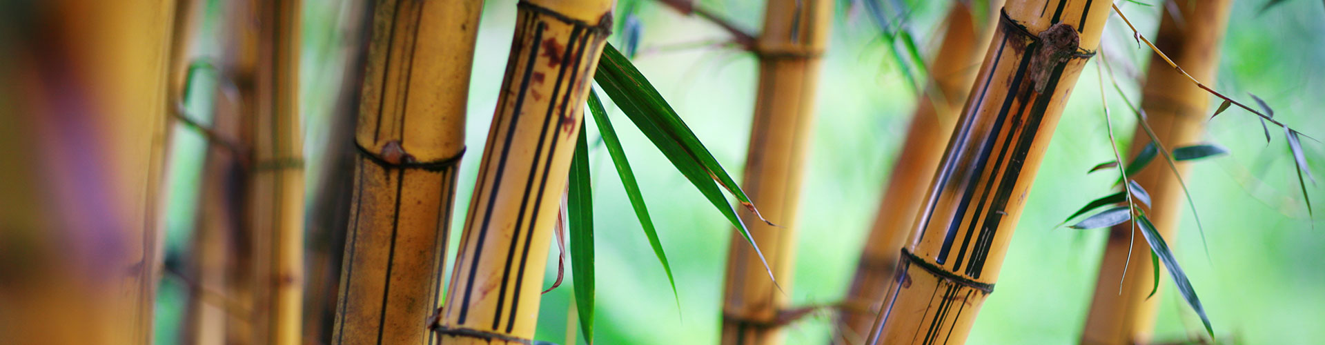 Bamboo Fiber: What is it? Why use it?