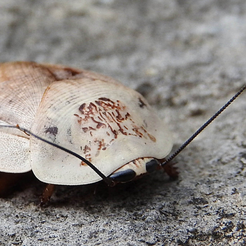 10 incredible facts about insects!