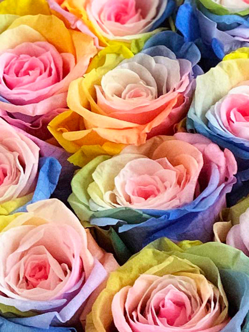 Meaning of Rose Colors
