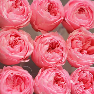 9 Forever Peony Box