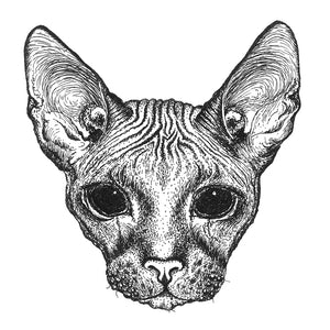 Bald Cat Drawing Print