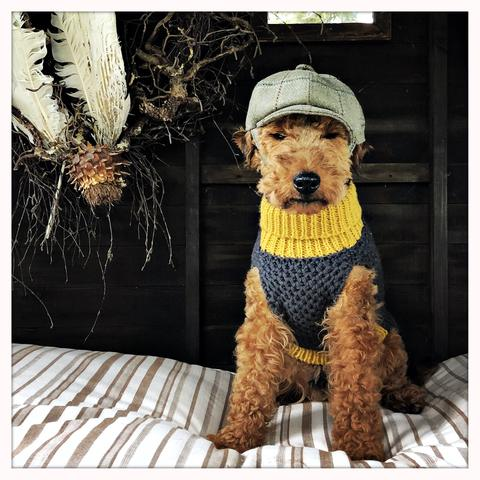 Howie the cheeky Welsh Terrier in the Smithy Dog Polo Neck and Tweed Baker Boy Hat