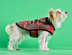 Rabbit in his Harris Tweed Watney Duffle Dog Coat