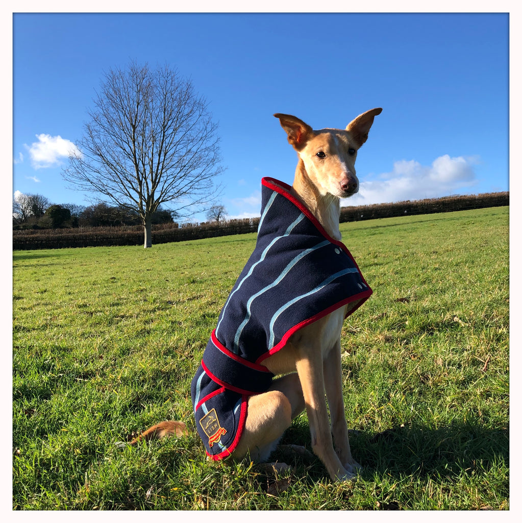 Cecil Blazer Dog Coat for Greyhounds & Whippets