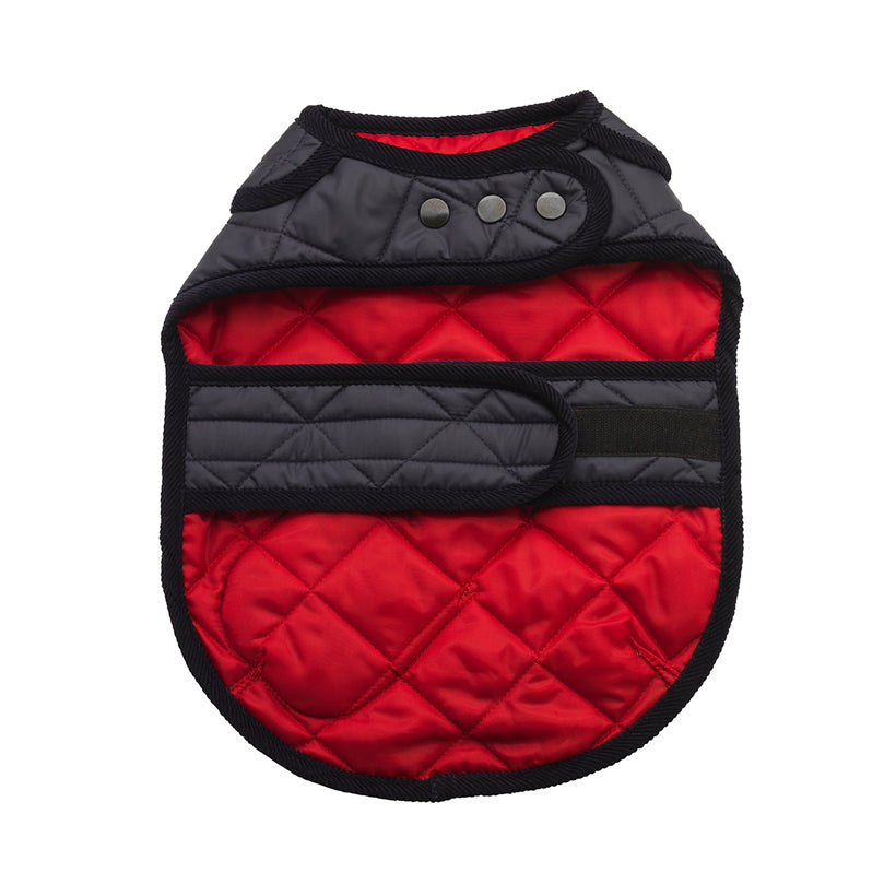 designer Red quilted dog raincoat for whippets