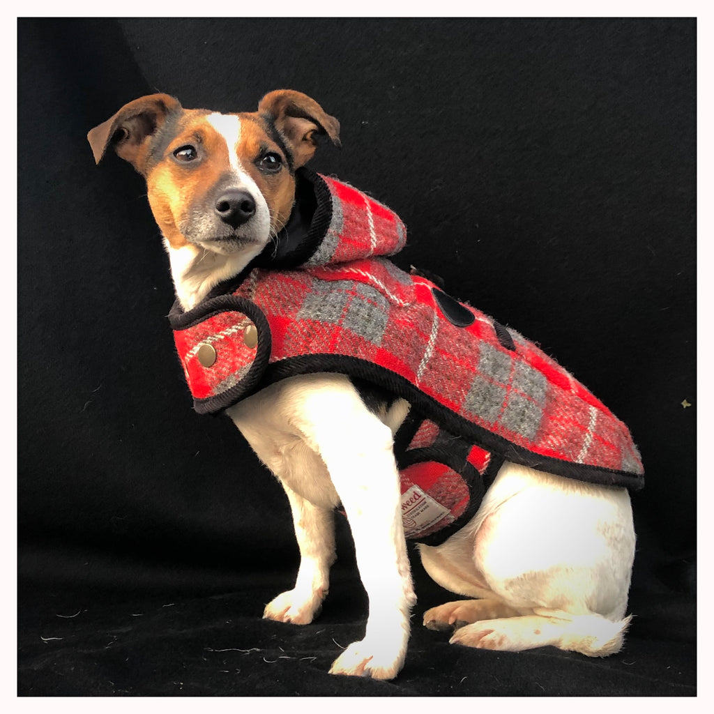 Dog duffle coat in red tartan harris tweed modelled by jack russell