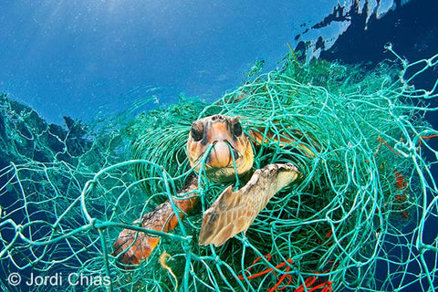 turtle stuck in plastic fishing nets