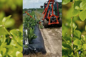 TTR 4400 HST Pruning Blueberries