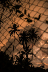 Orange Clouds, Palm Trees and a Fence - AXS ART buy affordable art by emerging artists online