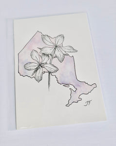 Ontario Wildflowers Artwork