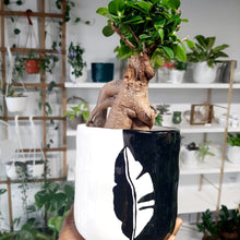 Load image into Gallery viewer, Ficus retusa bonsai