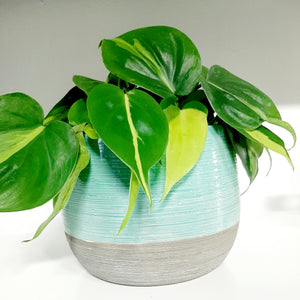 Two toned grey rimmed pot