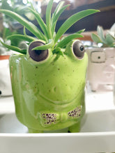 Load image into Gallery viewer, Mini Animal succulent planters