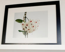 Load image into Gallery viewer, Framed Plant Prints
