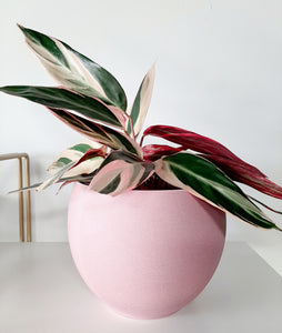 Pretty in Pink pot 💗