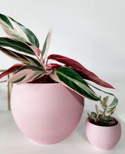 Load image into Gallery viewer, Pretty in Pink pot 💗