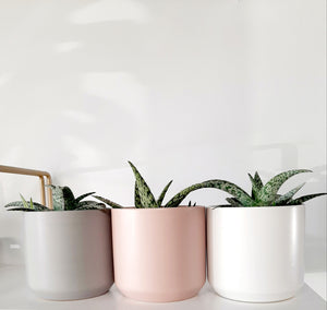 Modern Neutral Tones pots