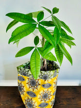 Load image into Gallery viewer, Money tree plant