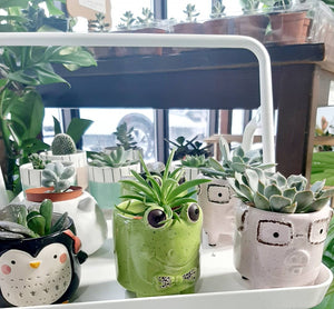 Mini Animal succulent planters