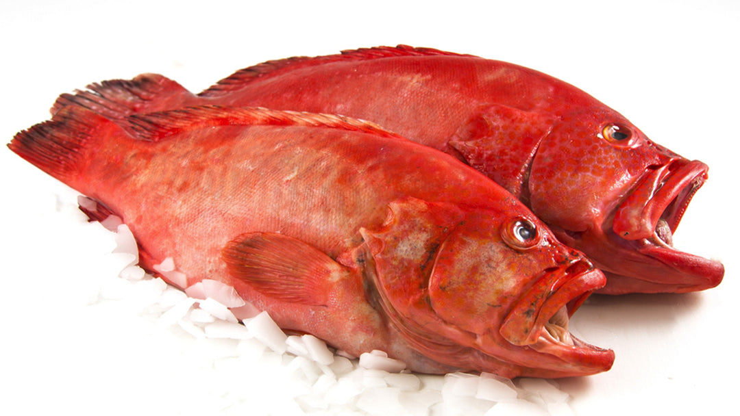 Rockfish health benefits, hazards, recipes, and more.