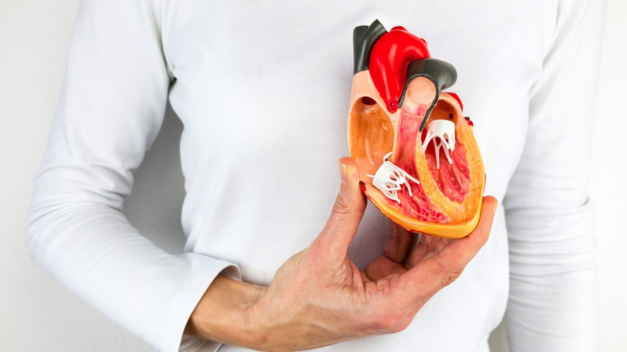 Man holding a plastic model of human heart