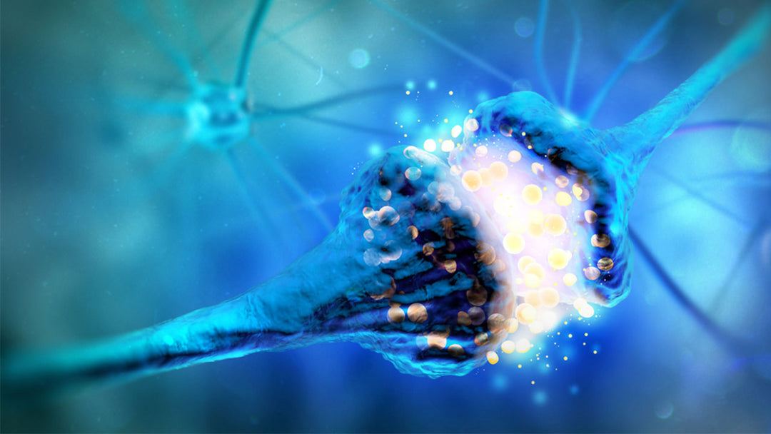 Your brain communicates using neurotransmitters