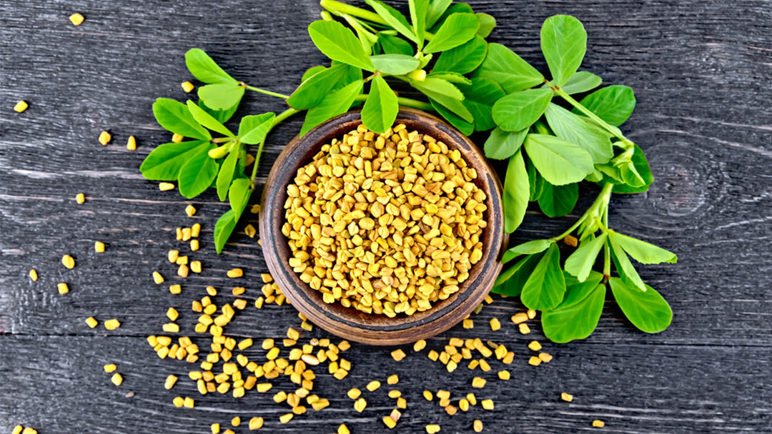Learn about fenugreek benefits for men and women and Mother's Milk Tea.