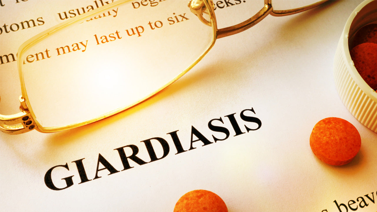 Giardiasis is a small intestine infection