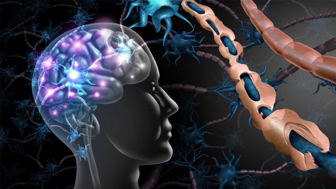multiple sclerosis and the brain