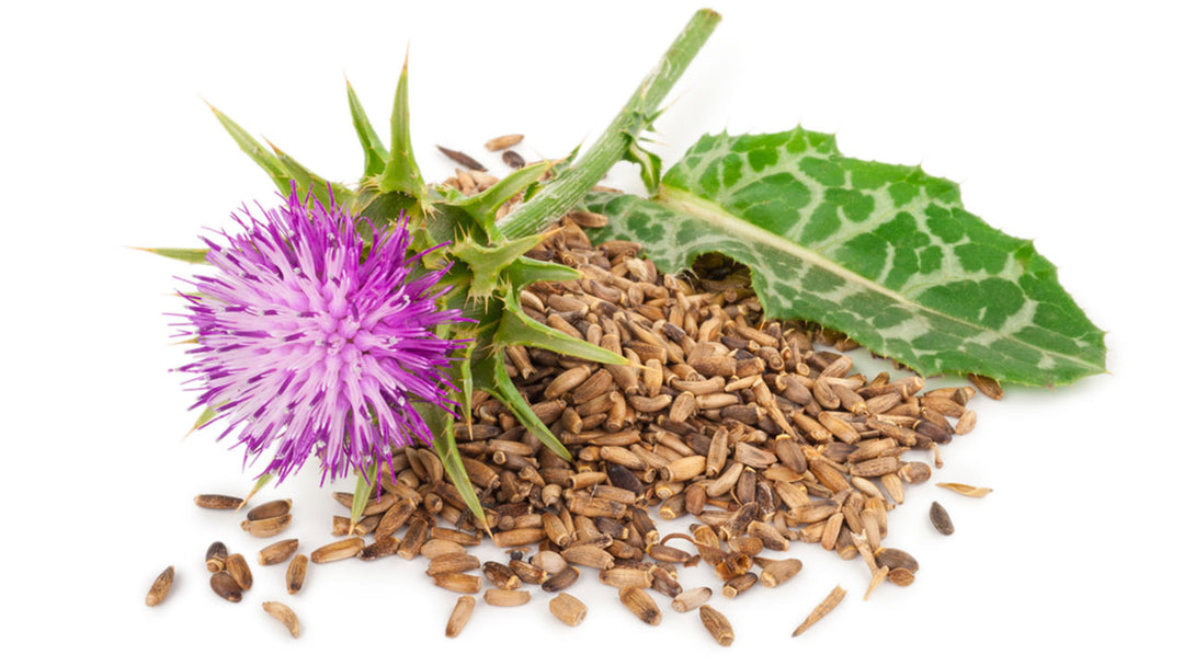 milk thistle natural cure