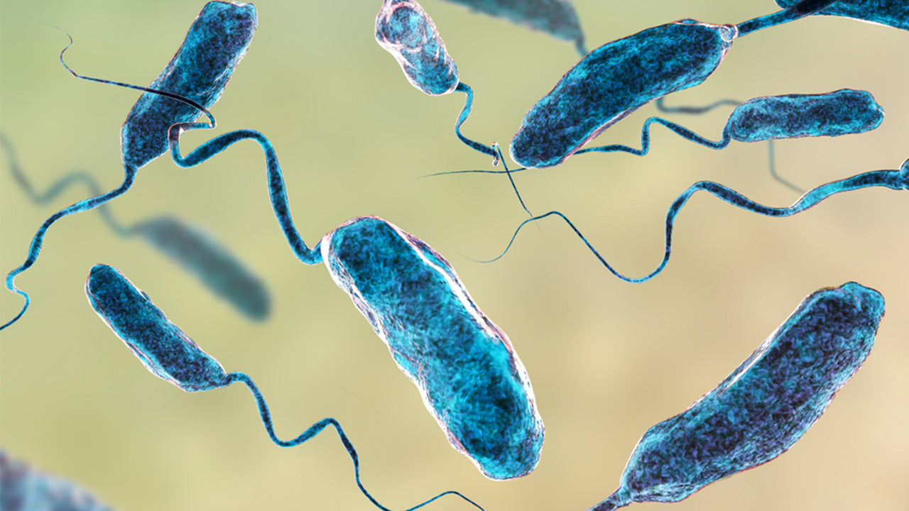 what are the early signs of vibrio
