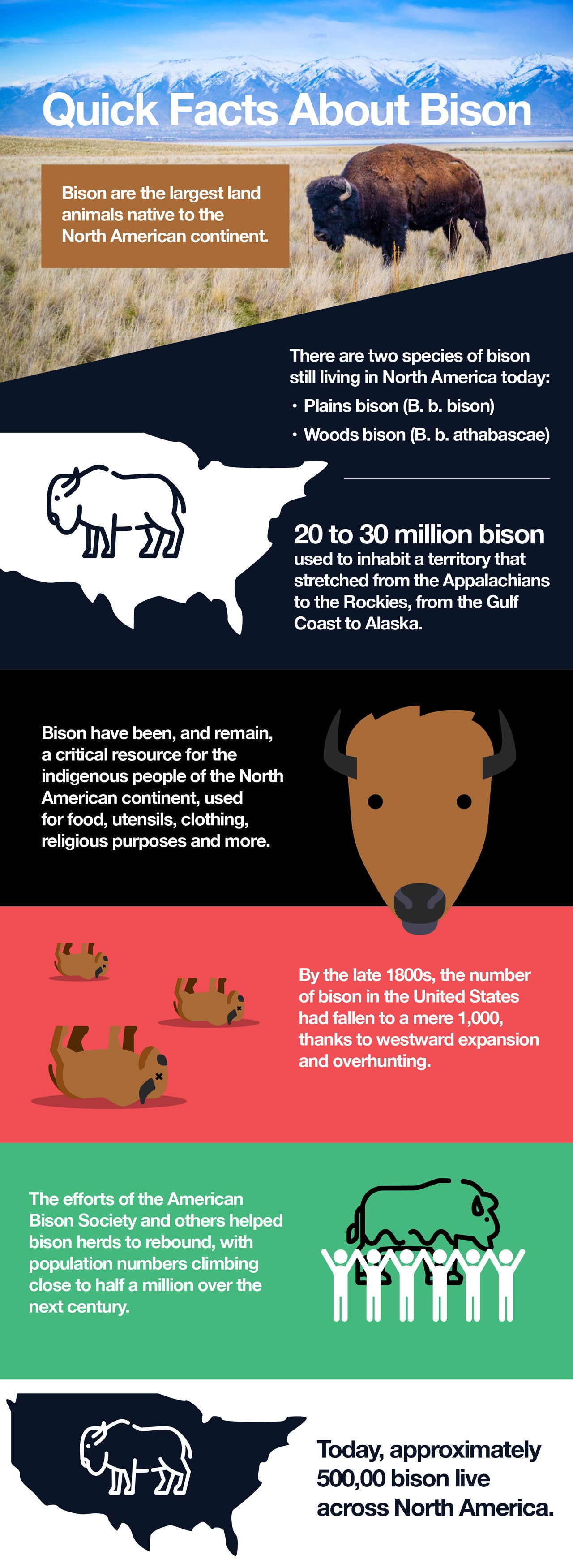 Quick Facts About Bison.
