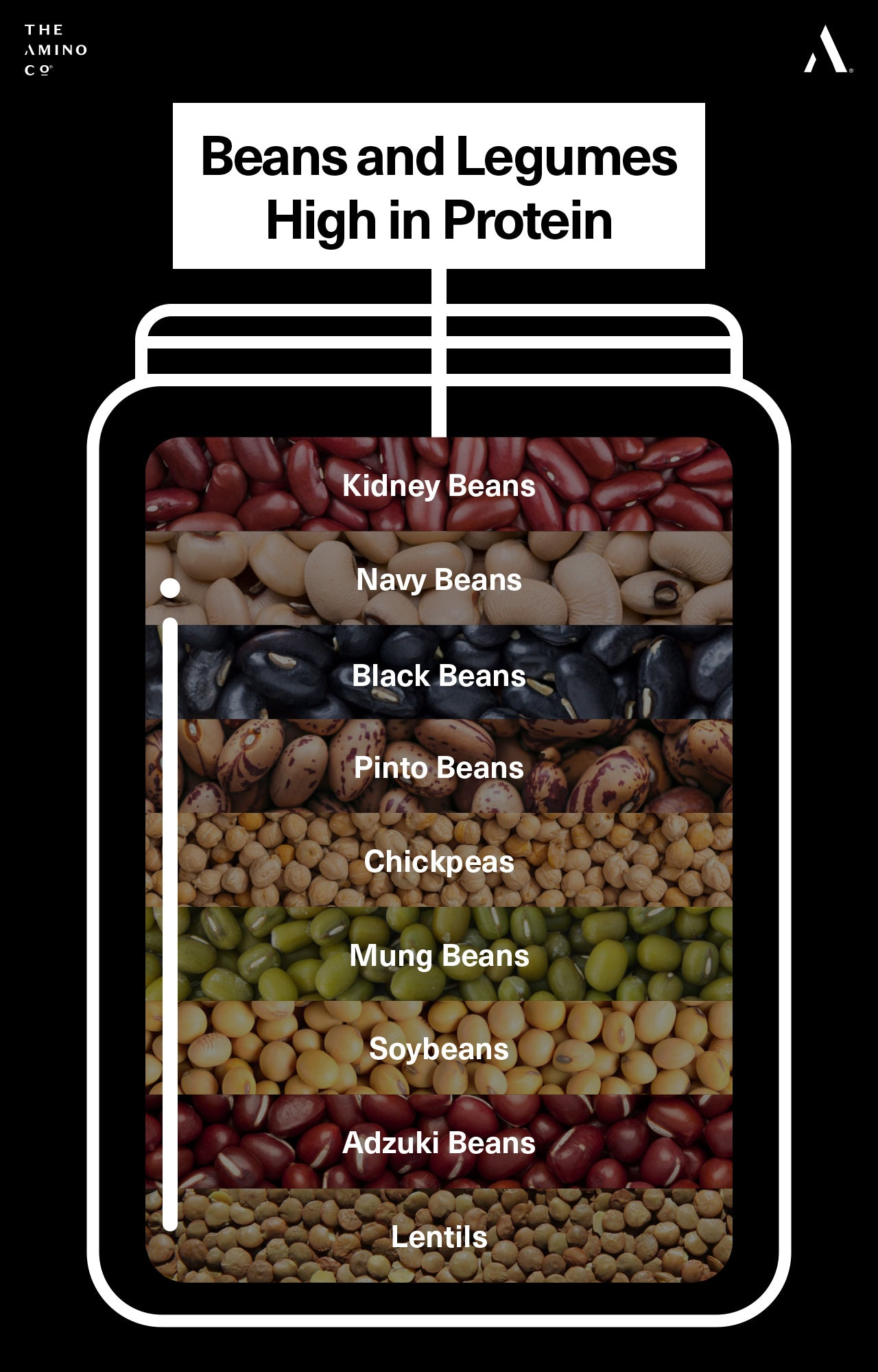 Beans and Legumes High in Protein
