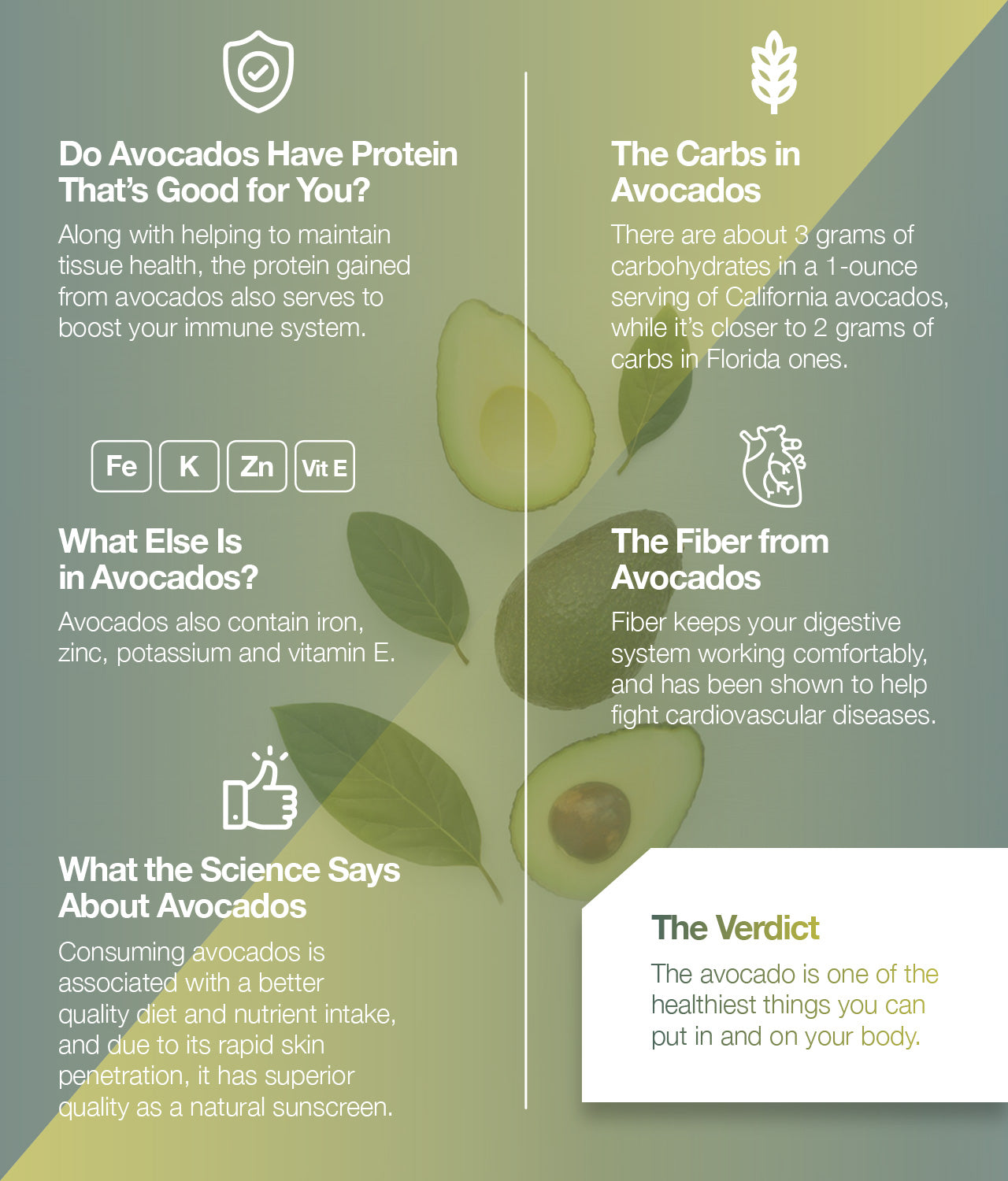 Do avocados have protein? Find out here