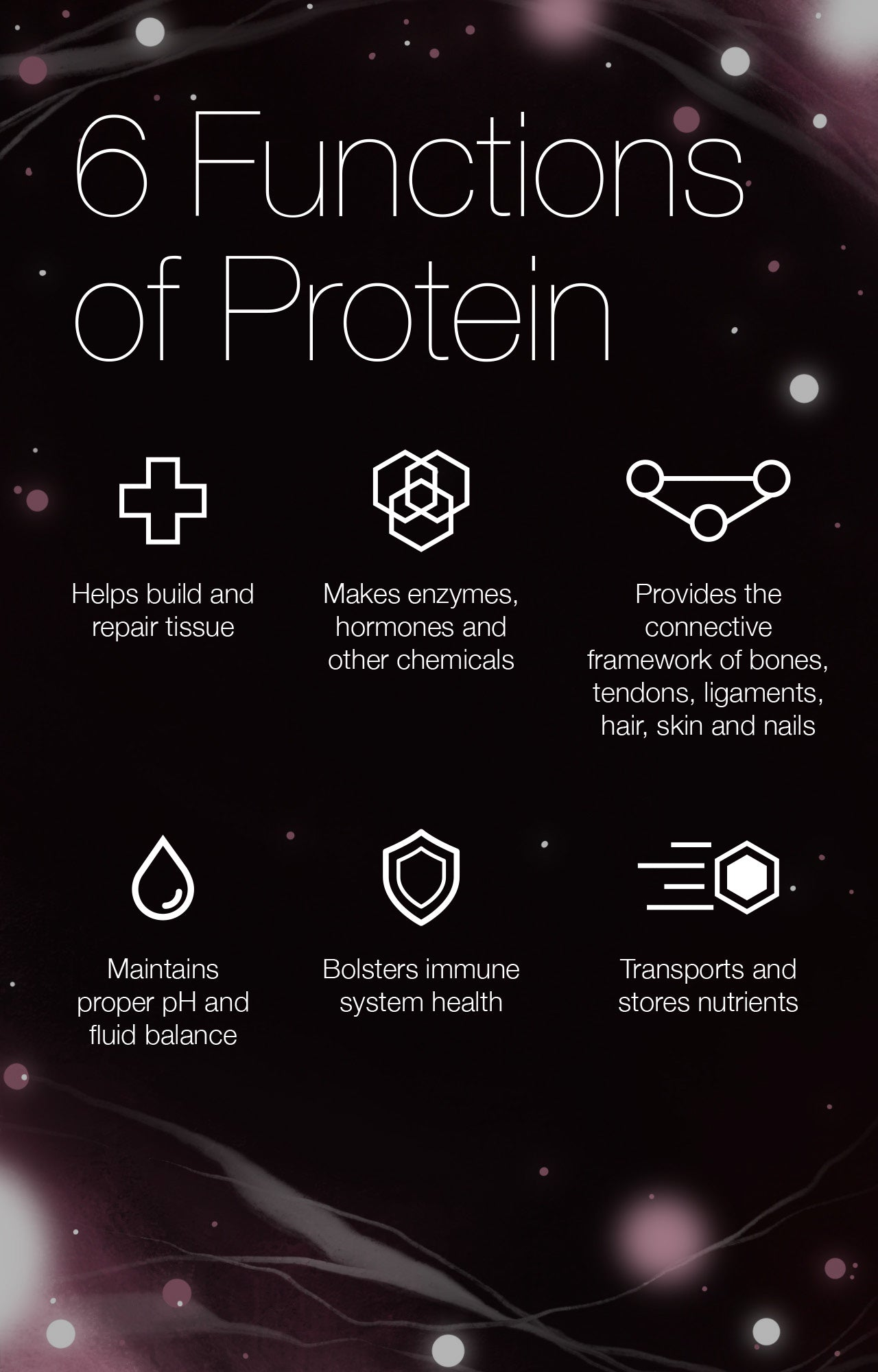 6 Functions of Protein