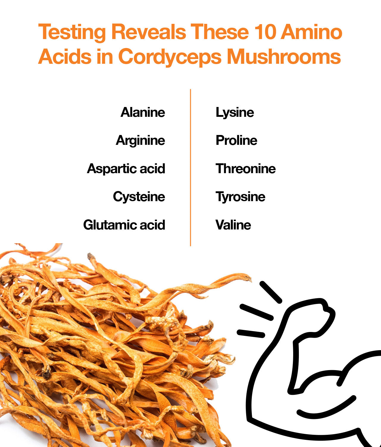 Testing Reveals These 10 Amino Acids in Cordyceps Mushrooms