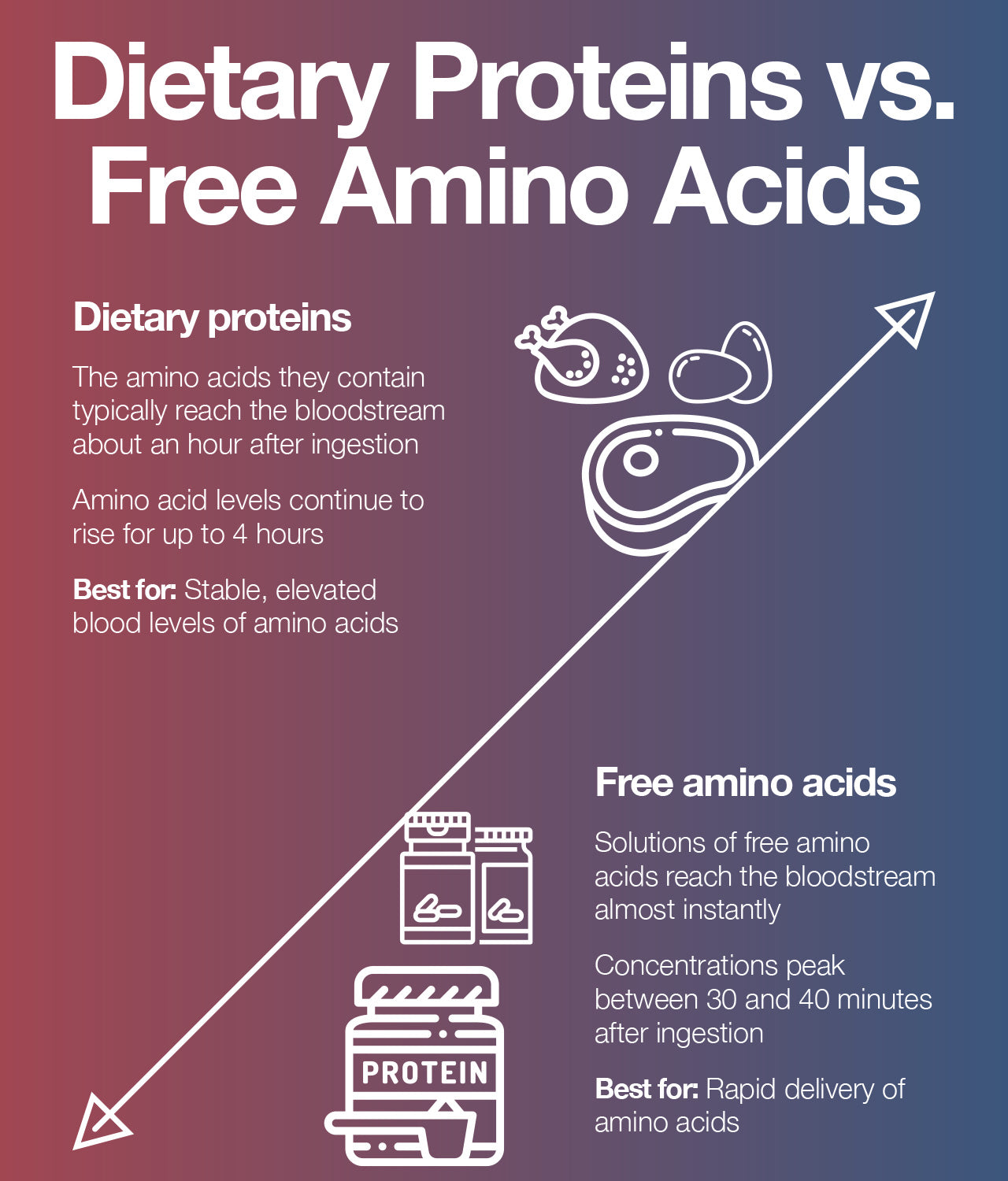 Protein and Free Amino Acids Digestion and Absorption: Which Wins the Race?