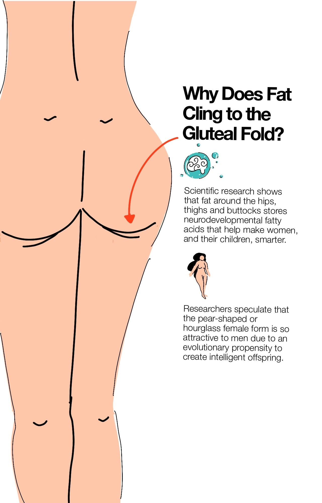 Why Does Fat Cling to the Gluteal Fold?