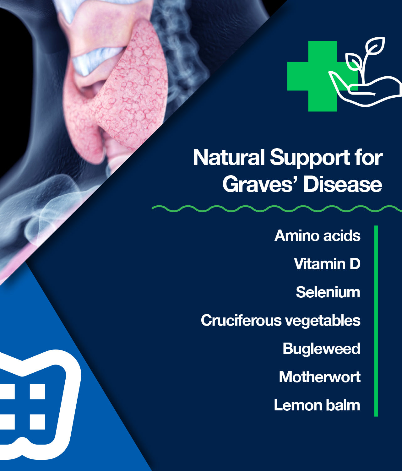 Natural Support for Graves' Disease