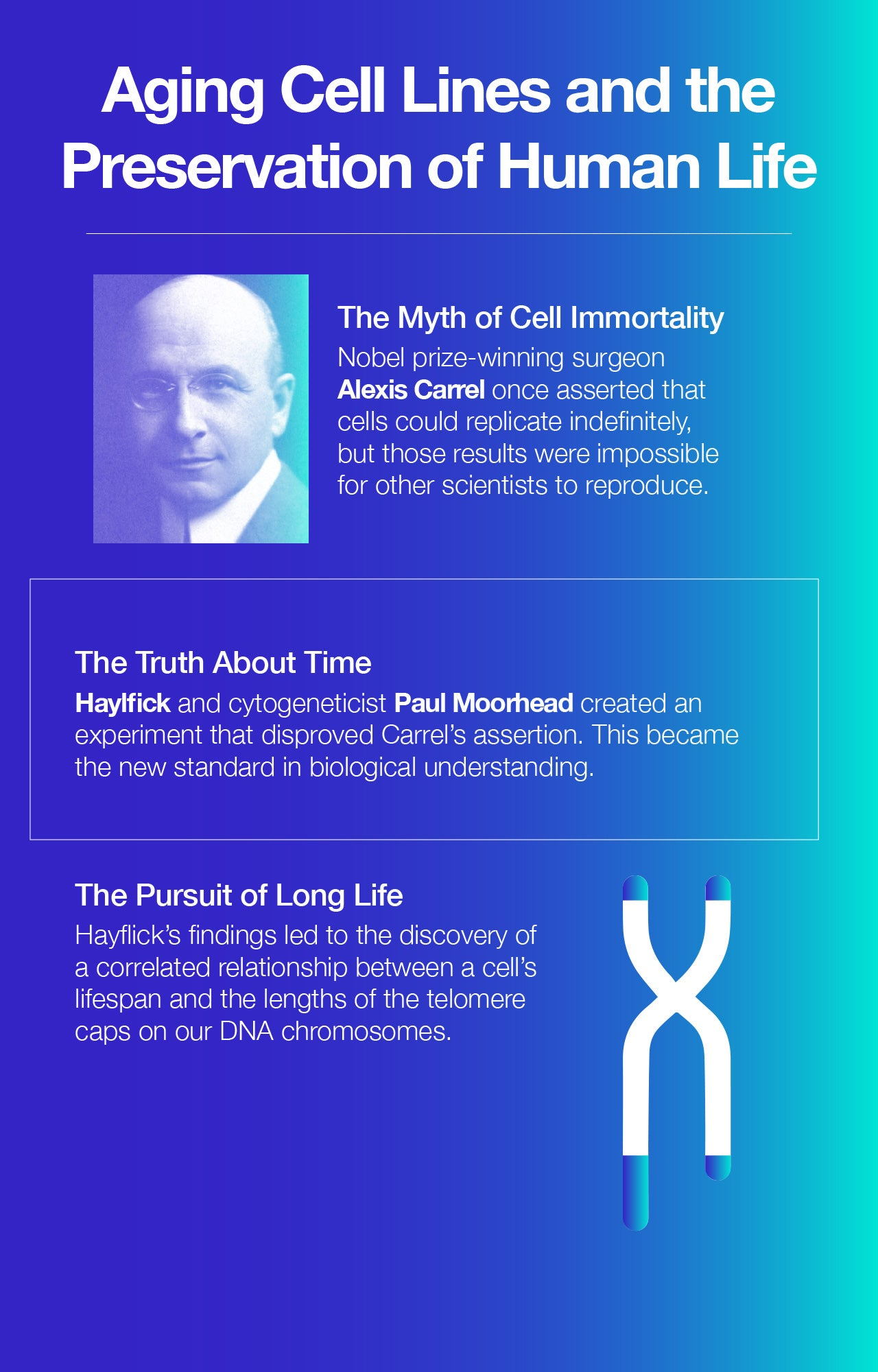 Aging Cell Lines and the Preservation of Human Life