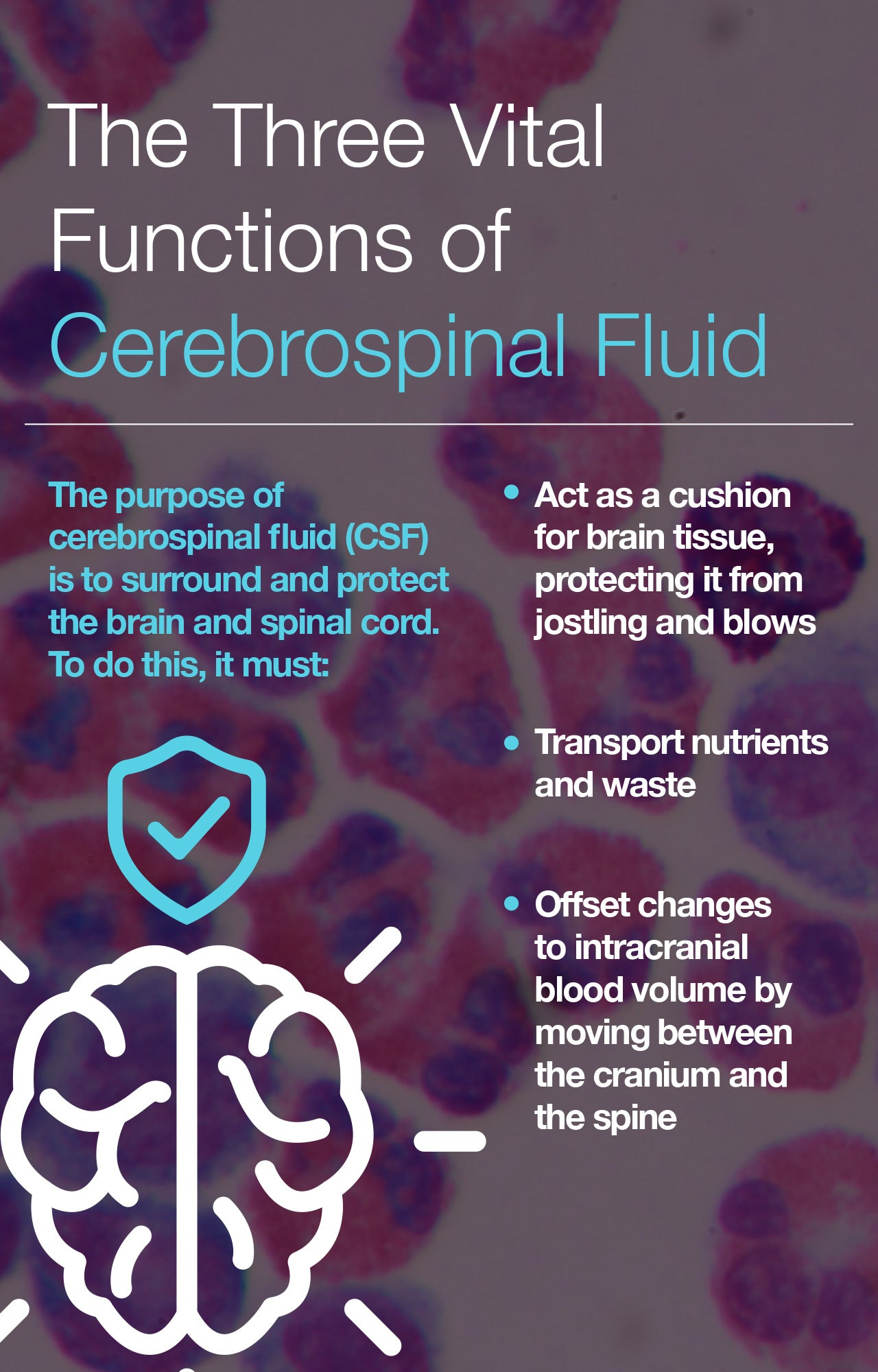 The Three Vital Functions of Cerebrospinal Fluid