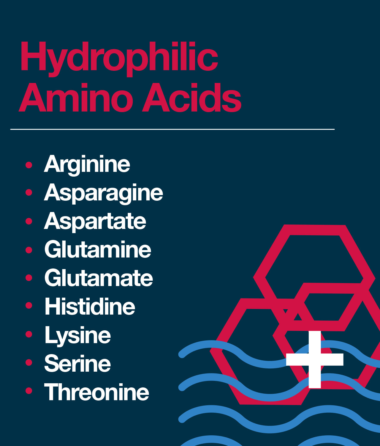 Hydrophilic amino acids: what do they do?