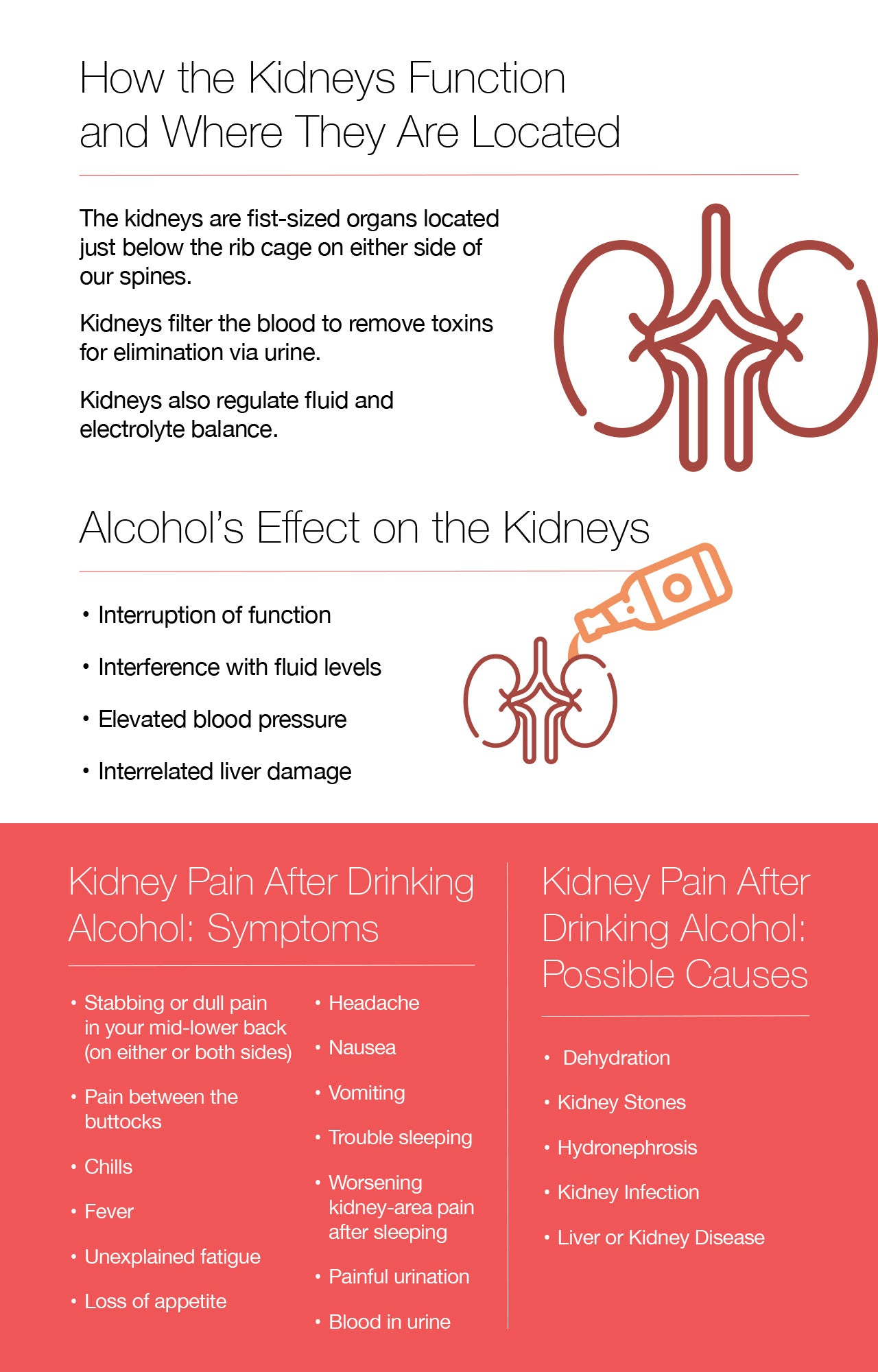 Alcohol's Effect on the Kidneys