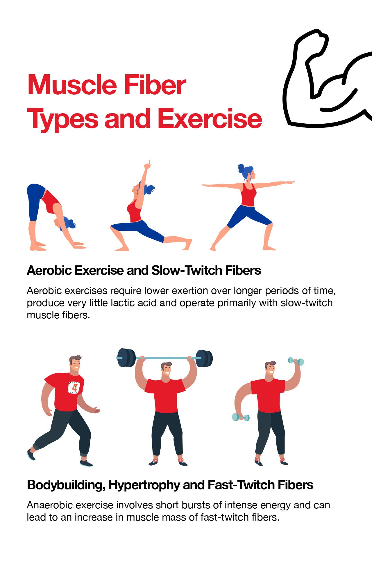 Muscle Fiber Types and Exercise