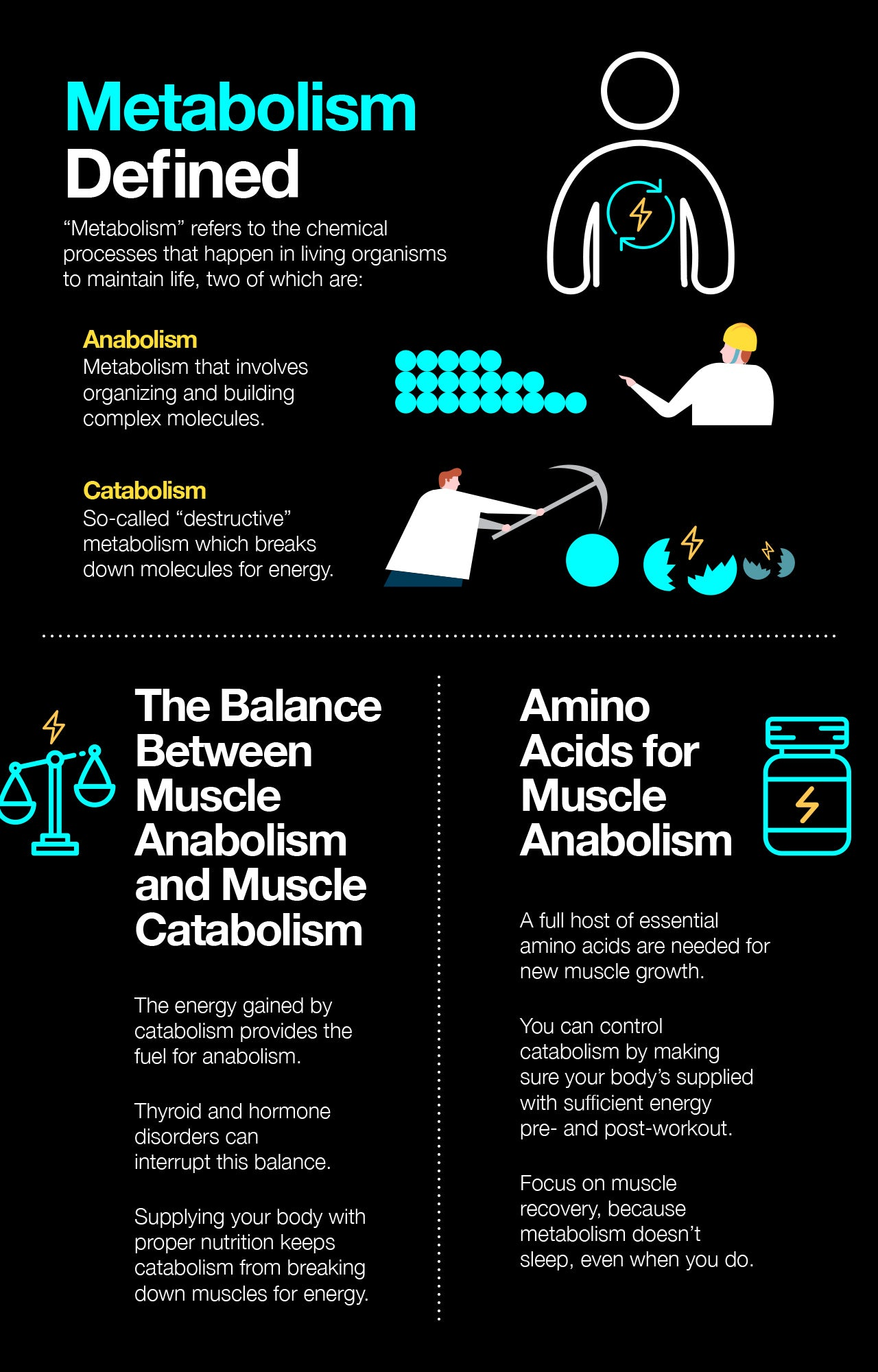 Muscle anabolism vs. muscle catabolism in bodybuilding.