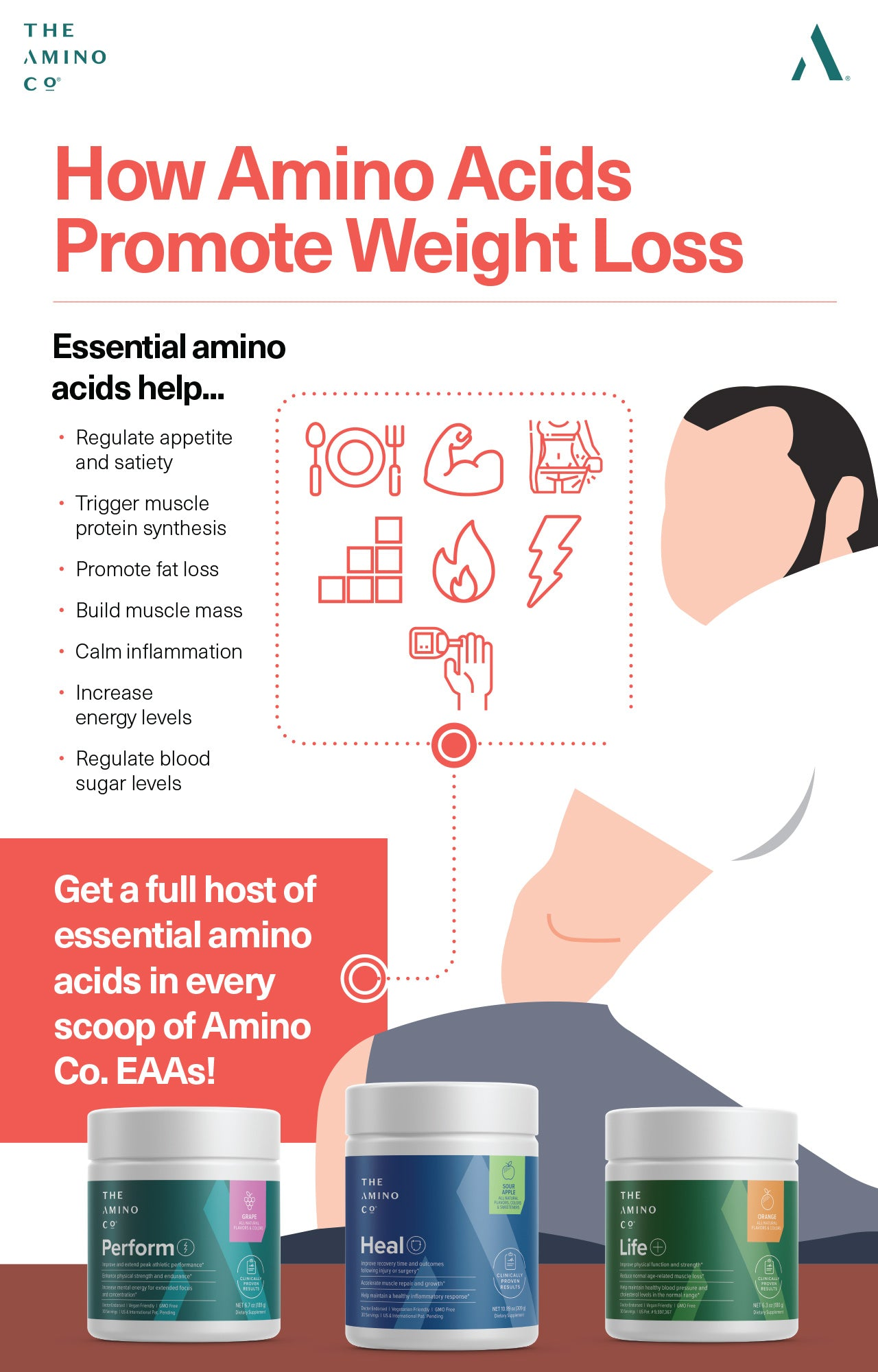 How Amino Acids Promote Weight Loss